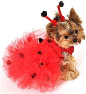 Selección de los mejores Disfraces Para Mascotas que puedes comprar por Internet